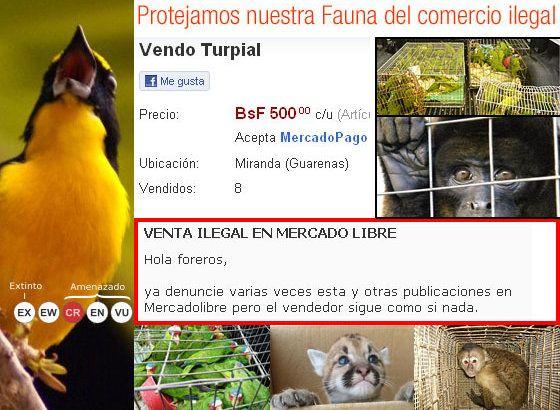 Campaña contra el tráfico de Fauna Silvestre en Mercado Libre