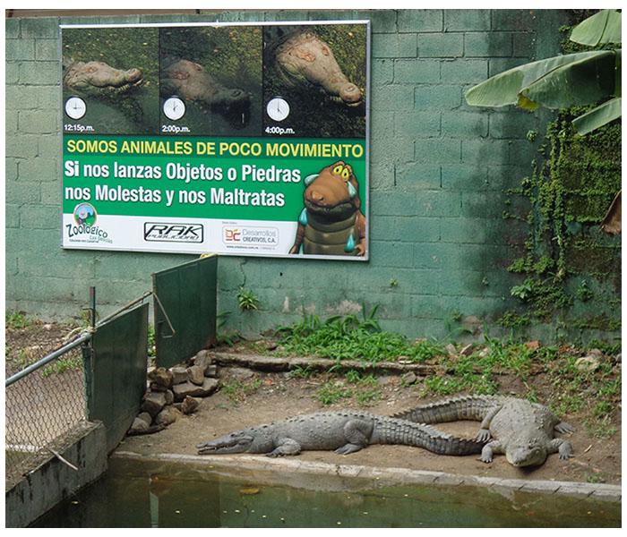 colaboración con el zoológico las delicias de maracay