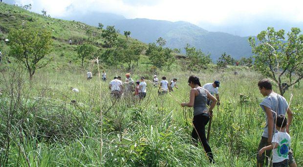 reforestacion-del-henri-pittier